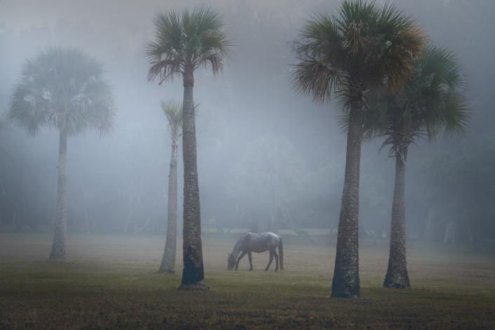 Horse in Fog on Cumberland Island