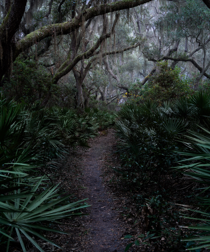Pathways Through Time