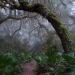 Misty Magic on Cumberland Island