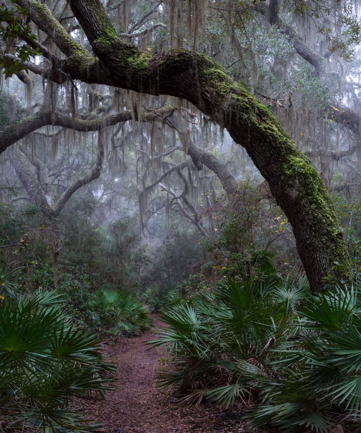 Misty Magic on Cumberland Island