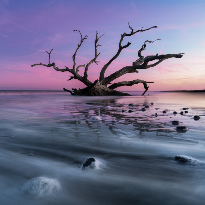 Sunset Magic on Driftwood Beach