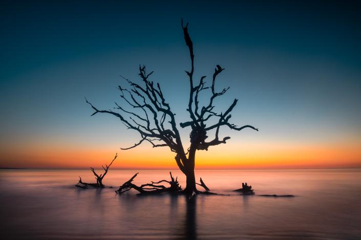 Driftwood Beach Blue Hour