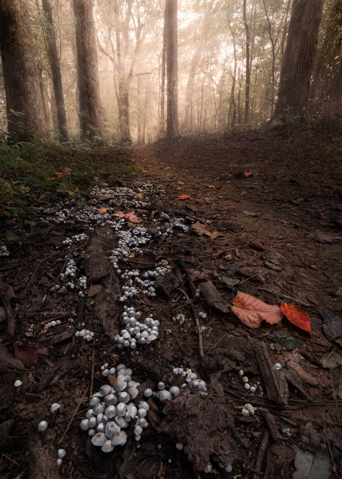 Tiny Mushrooms at Oconee Veterans Park