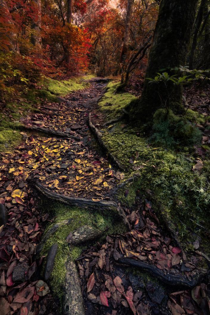 Appalachian Trail in the Fall