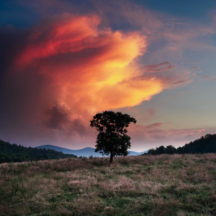 Tree Under Stormy Sunset