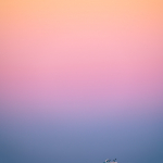 Out to Sea Under Pastel Skies
