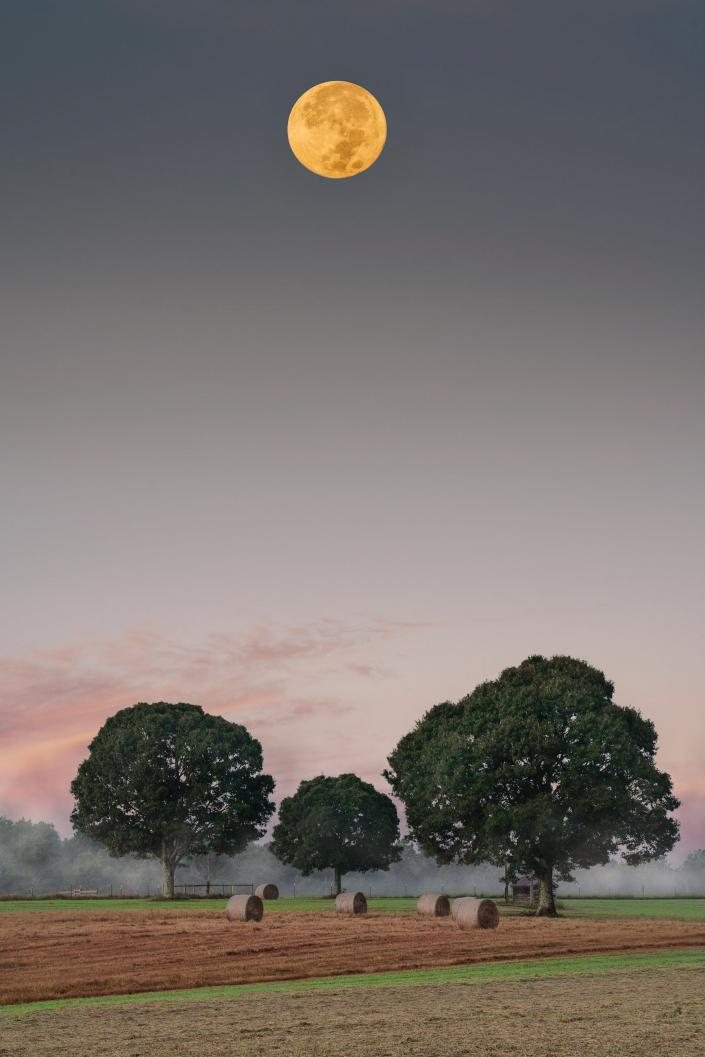Three Trees Under a Full Moon