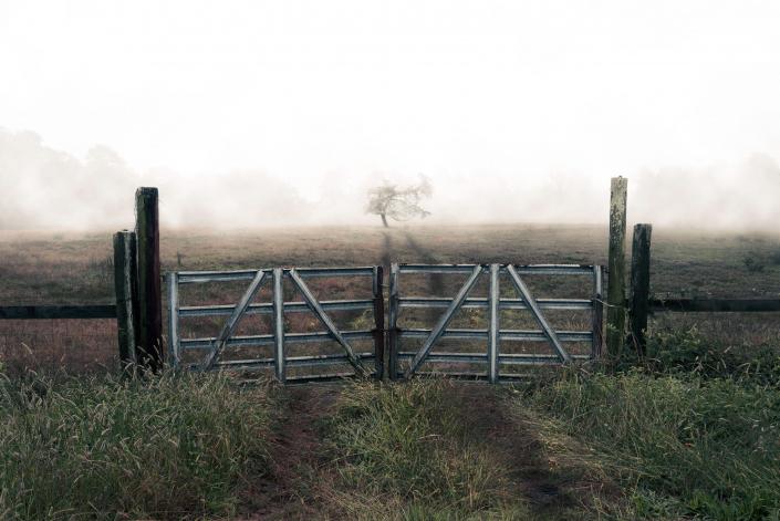 Foggy Tree in Field