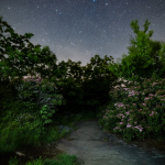 A Starry Night on the Appalachian Trail